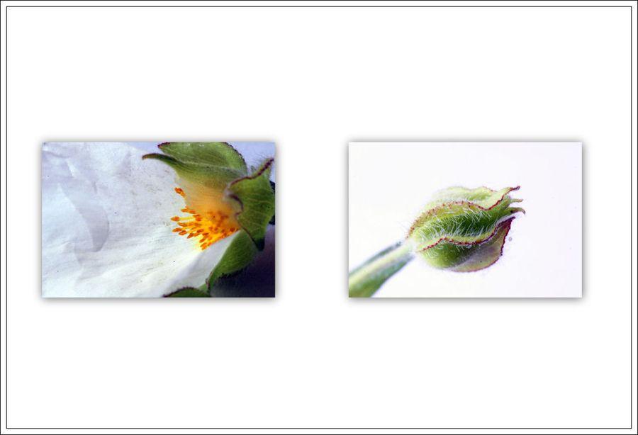 Mes images5 blg