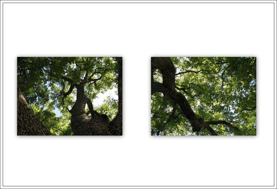 Mes images3 3blg