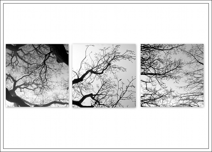 Branches1 blg