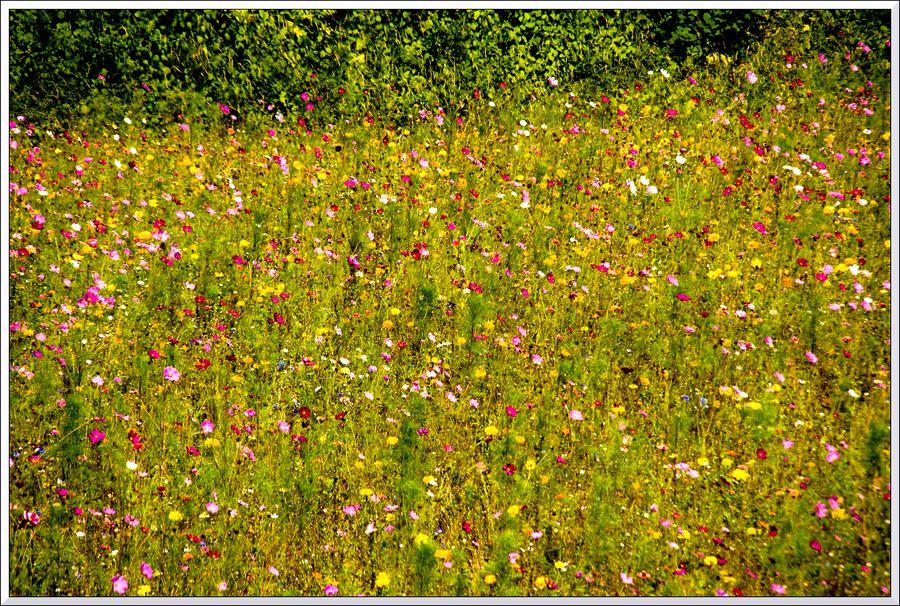 Fleurs lr a_blg