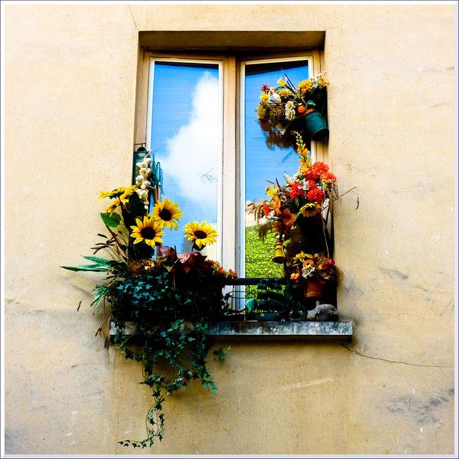Fenetre fleurs x blg