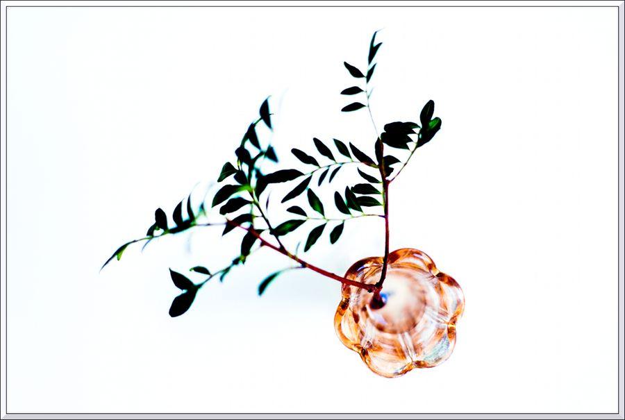 Fleurs 4 blg