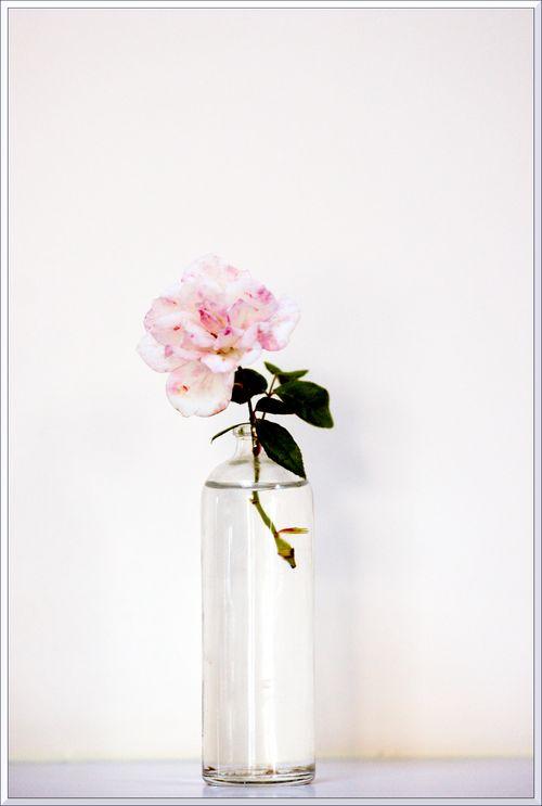 Petites roses sony-16 blg