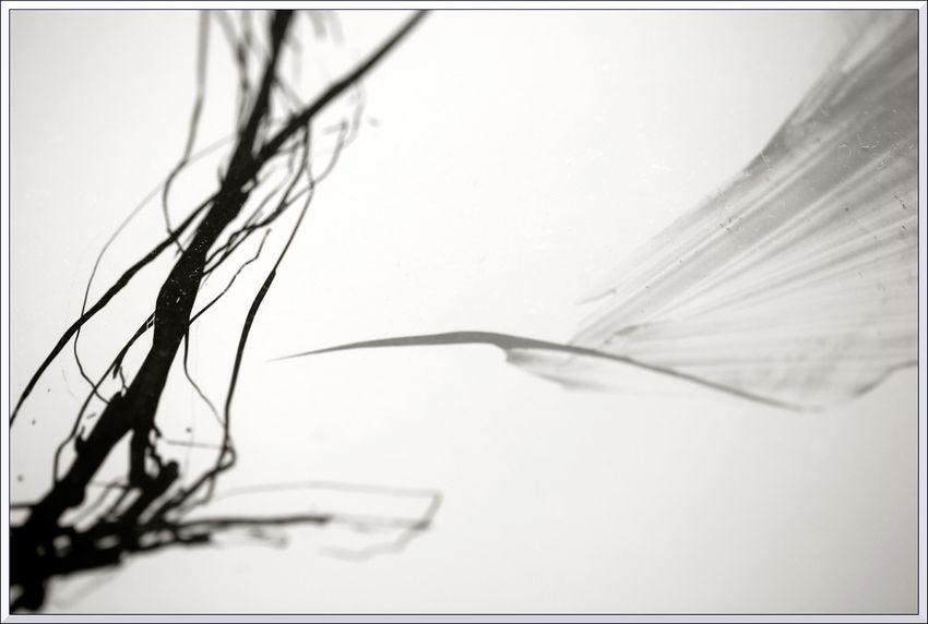 Macro feuilles LR x blg