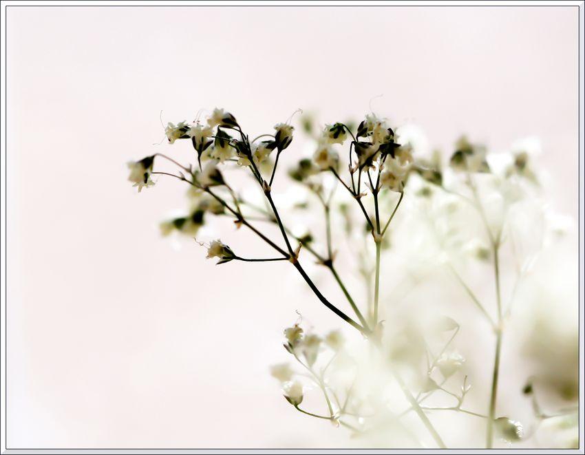 Macro petites fleurs HB 02 13 x-12 b blg