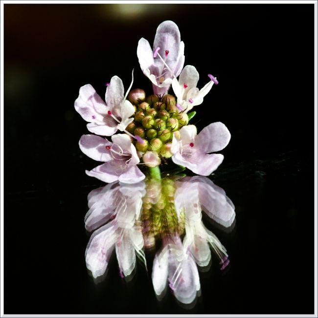 MACRO fleurs HB 10 12-38 blg