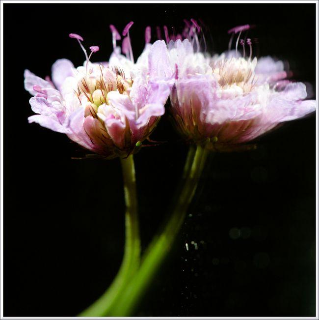 MACRO fleurs HB 10 12-11 blg