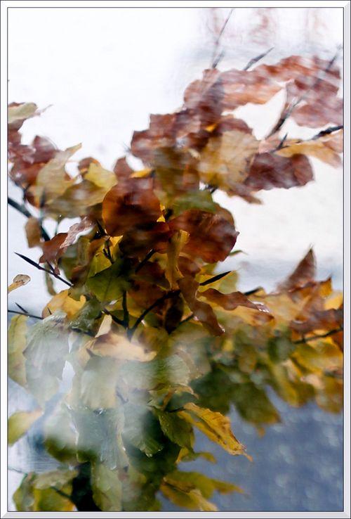 Pluie automne_-3 blg