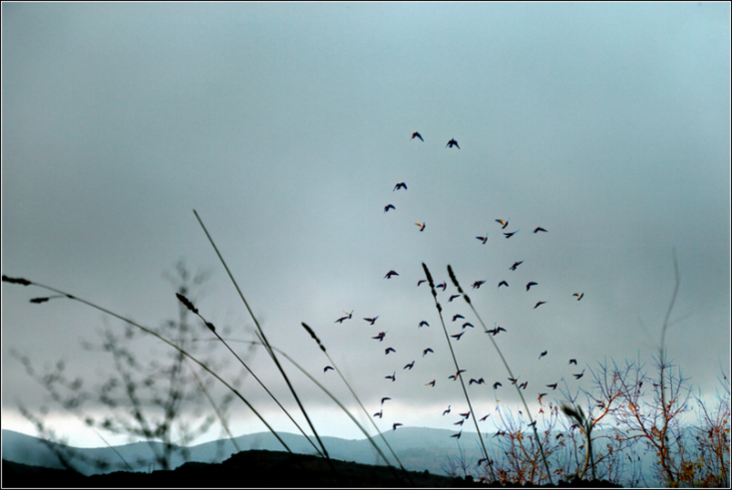 4-superpo paysage oiseaux 16
