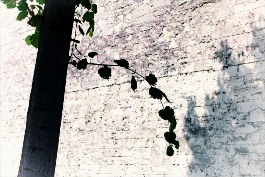 Leica balade 06 14_-50 se