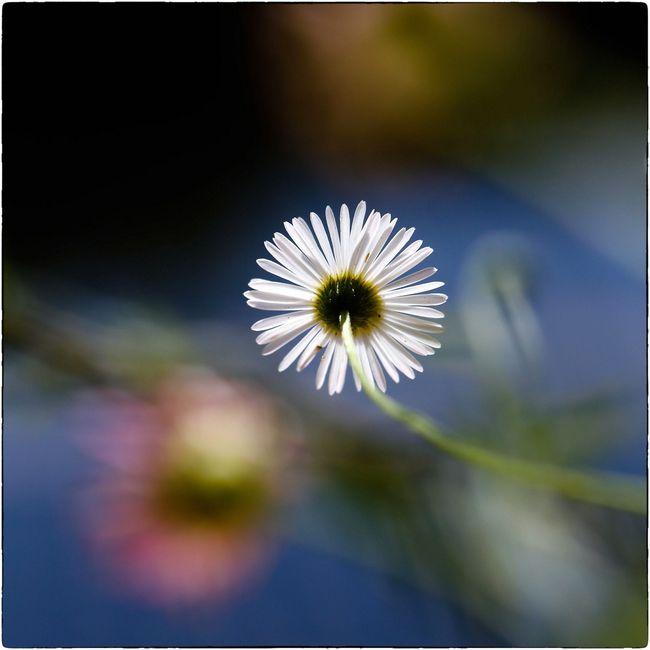 Fleurs macro canon 06 14 lundi-23
