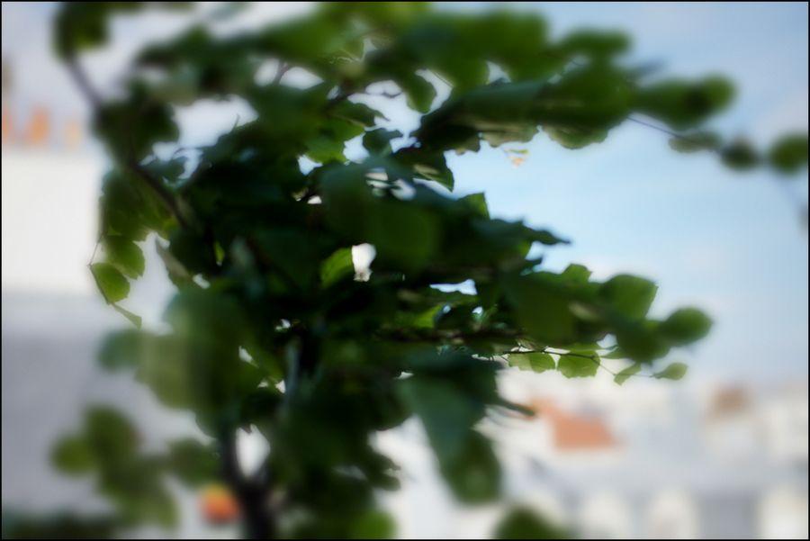 Leica 06 14-5 se