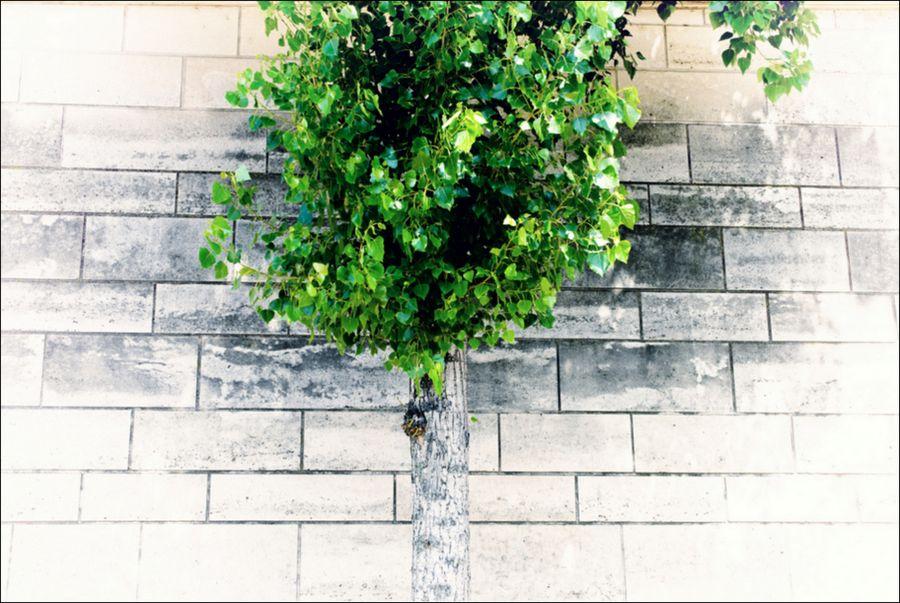 Leica balade 06 14_-37 se