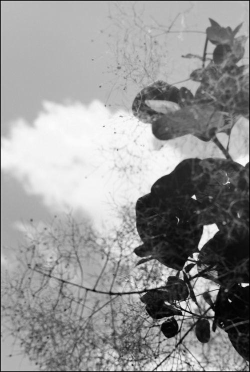 Leica balade 06 14_-47 se nb