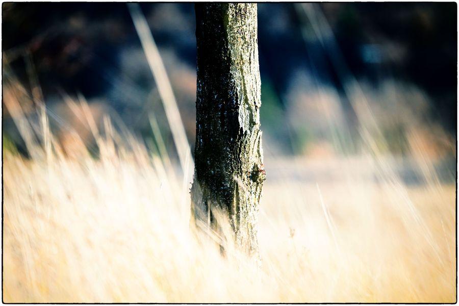 Tilleuils et herbes mars 15-15