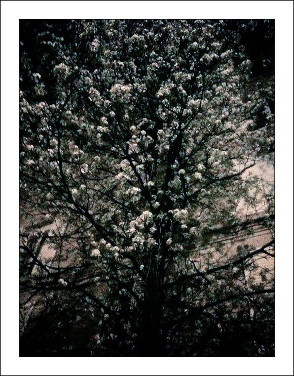 Fleurs nuit cl b