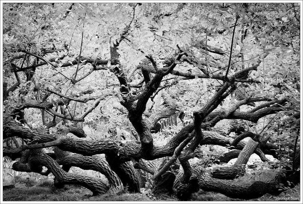 26-arbres 0022