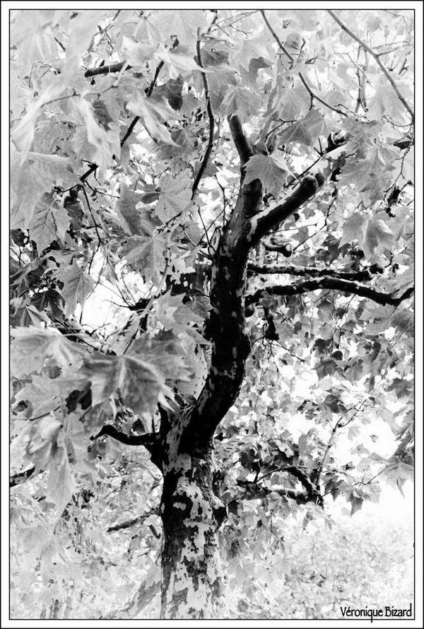 05-arbres 0001 NB