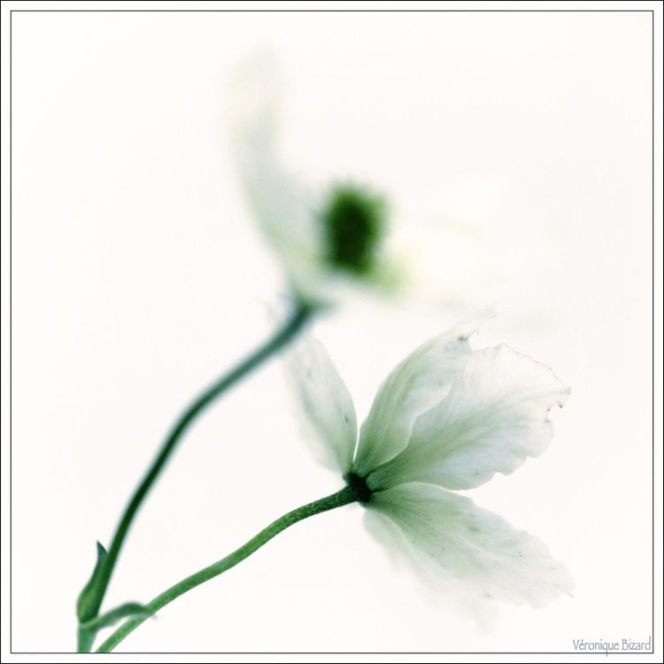 Roquette fleurs 041516-62