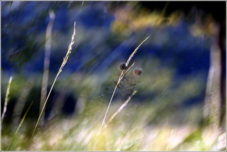 Super herbes 02 fb