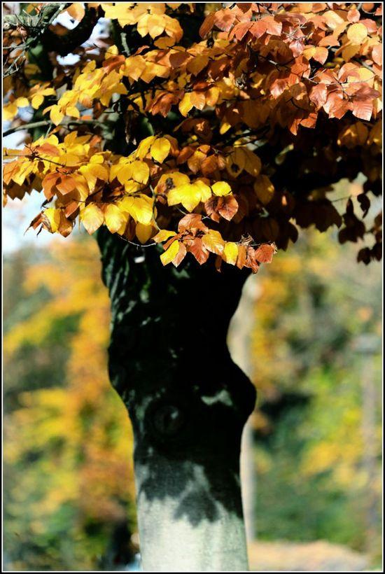 Automne feuilles_-2