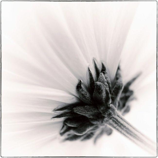 Fleurs jaunes 01 15_-23 nb