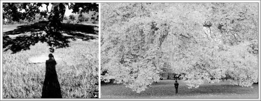 Diptyque ombres arbres  brd