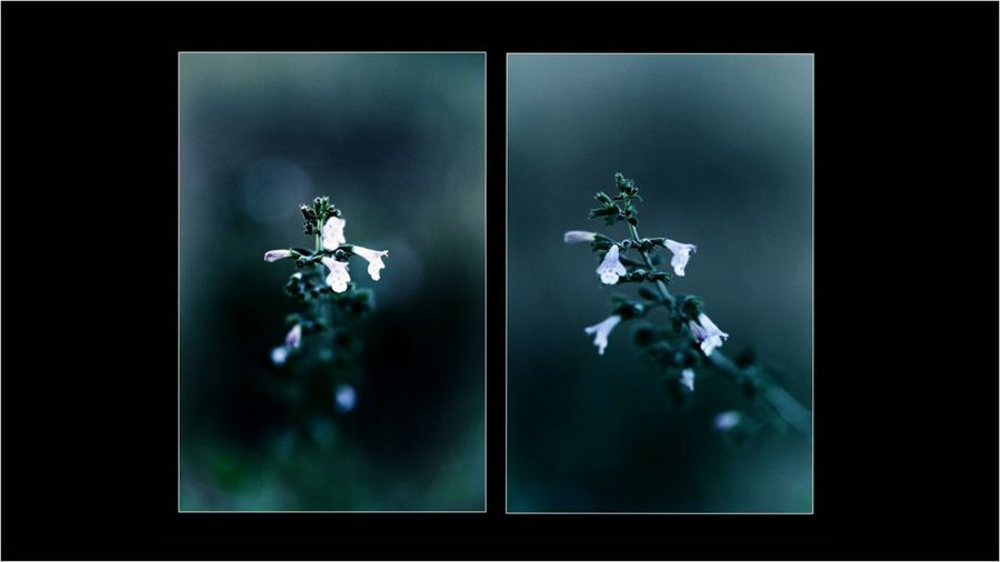 Fleurs dipt 01