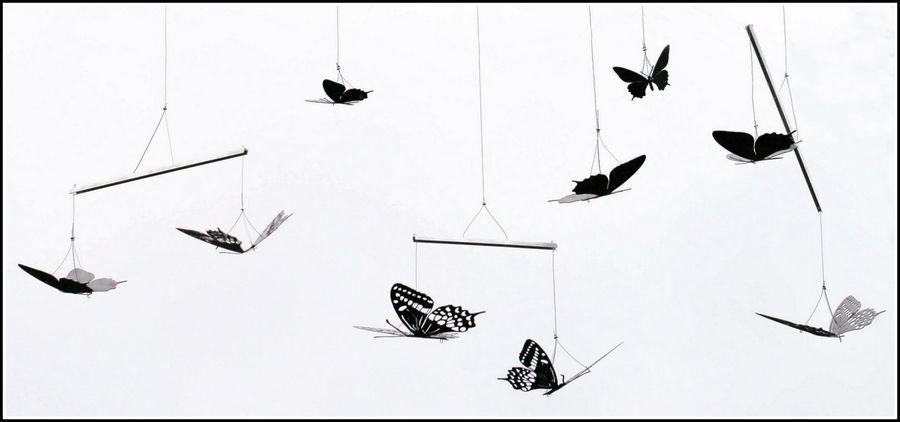 Papillons vb X