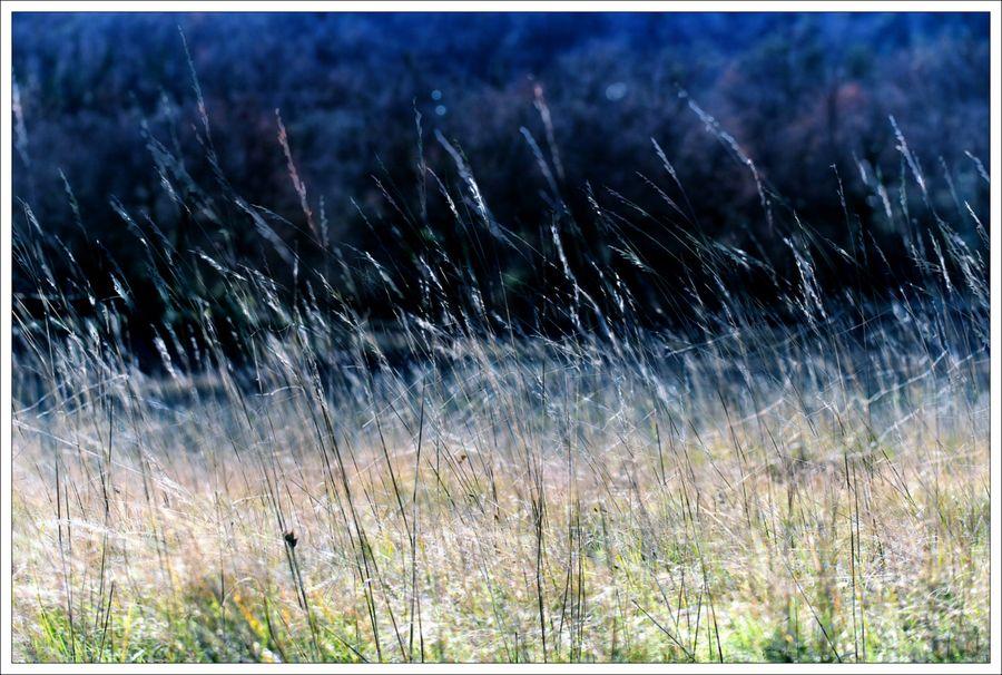 Vent herbes x 2 C