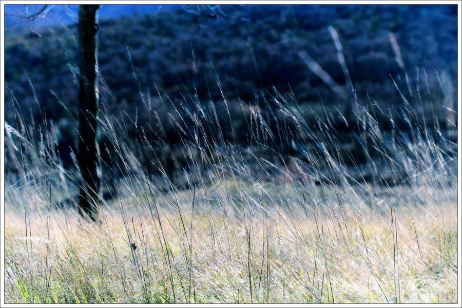 Vent herbes x 2 4