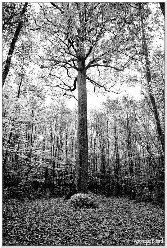 20-arbres 0015