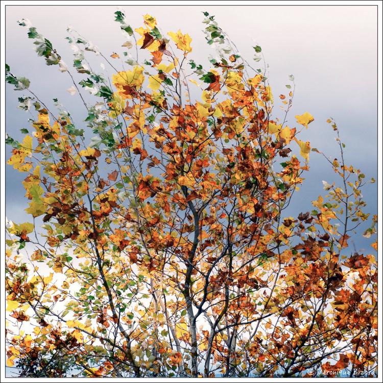04-arbres x 2 - copie