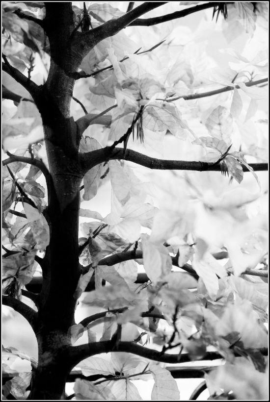 Super feuilles 02