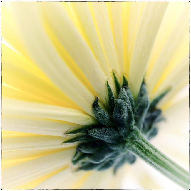 Fleurs jaunes 01 15_-23