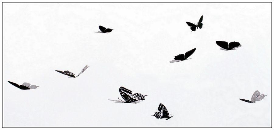 Papillons vb