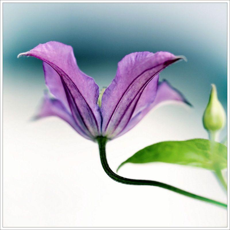 Petites fleurs mauves bastille avril 16_-35 - copie