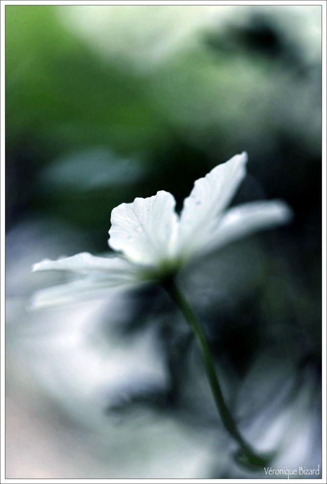 6-roses_-31