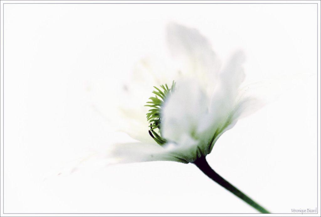 Roquette fleurs 041516-76