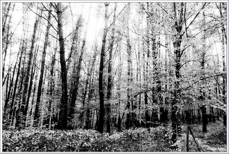 02-arbres 0021