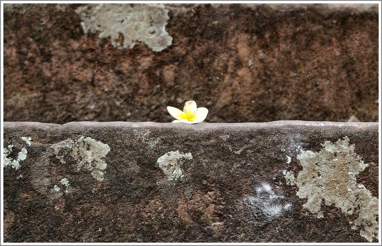 Fleur_marche_nb