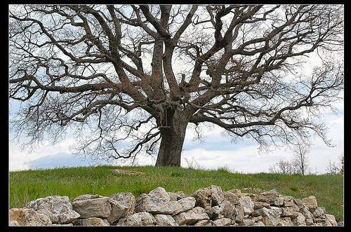 Auprs_de_mon_arbre_