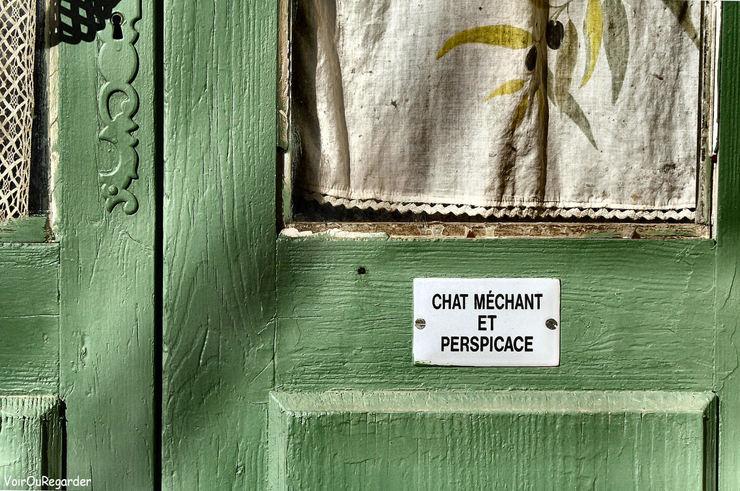 Chat_mechant_vog