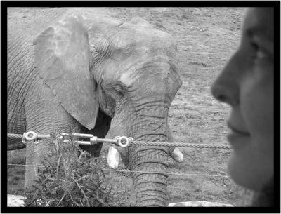 Elephant_xx