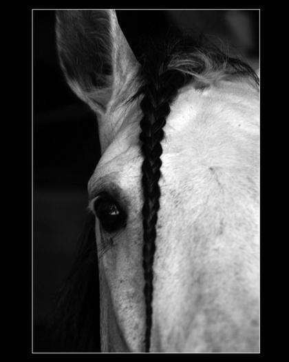 Loeil_du_cheval