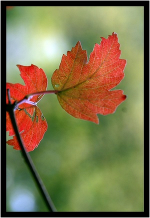 Petites_feuilles_d_automne_xx